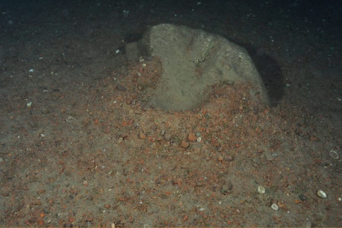 Cratère Aulonocranus