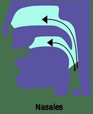 Voyelles nasales