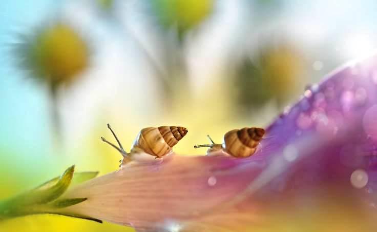 Psicoricetta - primavera