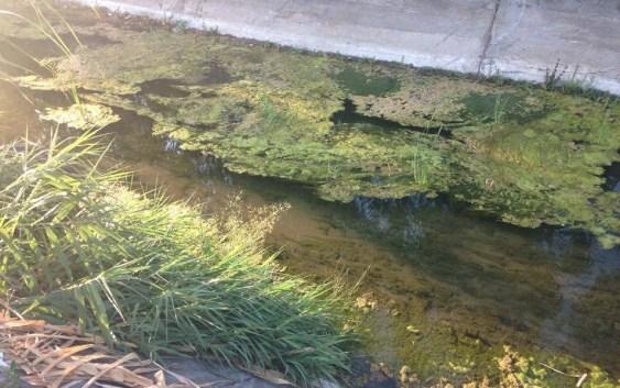 [VIDEO] Grisolia (Cs), proliferazione algale getta dubbi su inquinamento: la spiaggia diventa verde