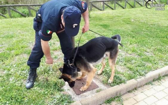 Aveva 560 grammi di cocaina in casa, arrestato 40enne nel Cosentino