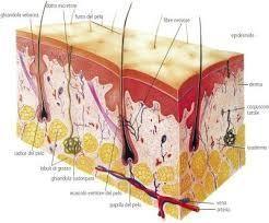 Cicatrizzazione procedura