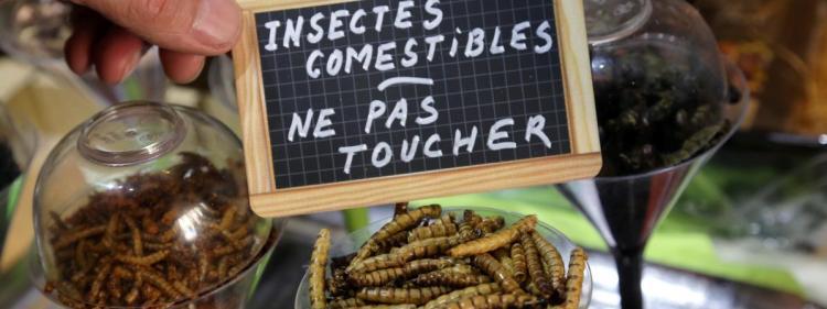 Des insectes destinés à la consommation alimentaire, à Thionville, en avril 2015.
