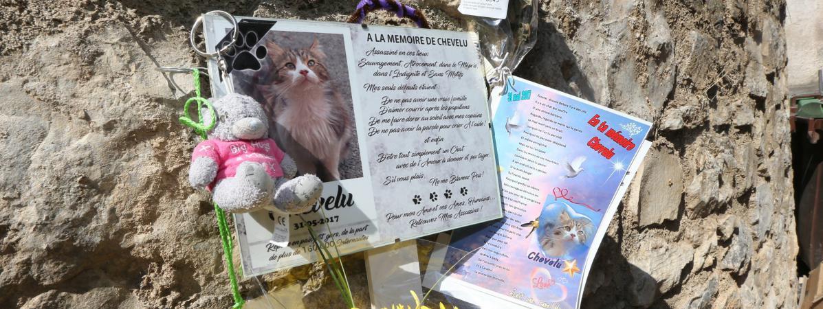 Une manifestation en soutien du chat prénommé Chevelu a été organisée par des associations de défense de la cause animale, le 17 juin 2017.