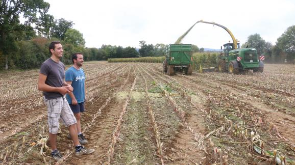 Florent Leportier et Côme Delaunay, devant un chantier d\'ensilage dans un champ de maïs, à Faverolles (Orne), le 27 septembre 2017.