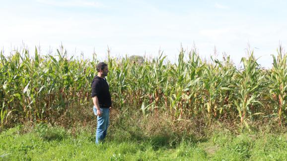 Alain Davydevant l\'un de ses champs de maïs, le 27 septembre 2017 à Pointel (Orne).