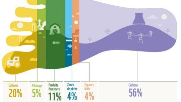 Aujourd'hui, la composante carbone liée à la combustion d'énergies fossiles représente plus de la moitié de l'empreinte de la France (56%). Elle est suivie des composantes cultures (20%) et produits forestiers (11%).