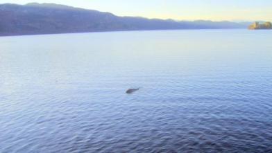 Une photo prise sur le Loch Ness en 2012 par le capitaine d\'un bateau emmenant les touristes en promenade. Le fameux monstre ?