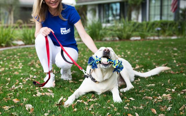 Fetch Pet Care Franchise 2020