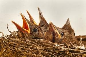 validation calls to franchisees beware of song birds