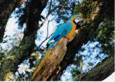 Profissional - Belezas Naturais: 1º Lugar Juarez Jose Gralak