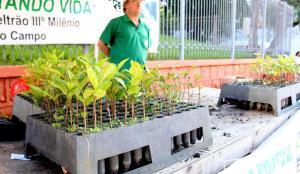 Mudas de espécies nativas e frutíferas estarão sendo distribuídas até esta quarta