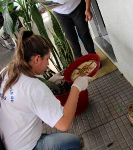 Coleta de entulhos e vistorias em terrenos foram intensificados nos últimos meses para eliminar criadouros de larvas