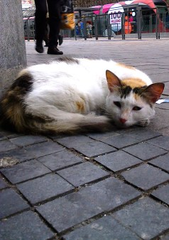 CHAT ATTENDANT LE TRAMWAY