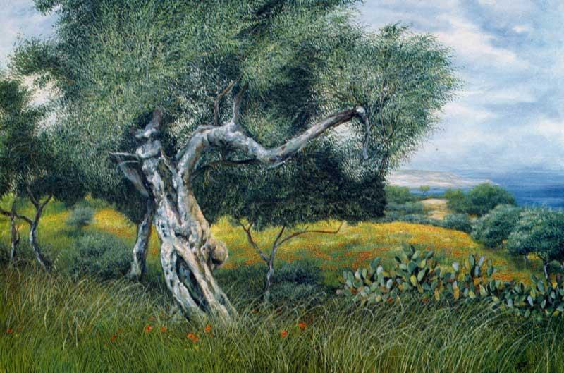 Nova Siris. L'ulivo, la pianta cara alla Dea Athena - olio su tela cm 120x80 anno 1982