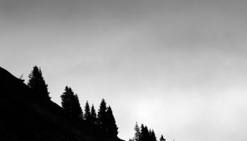 La silhouette des sapins