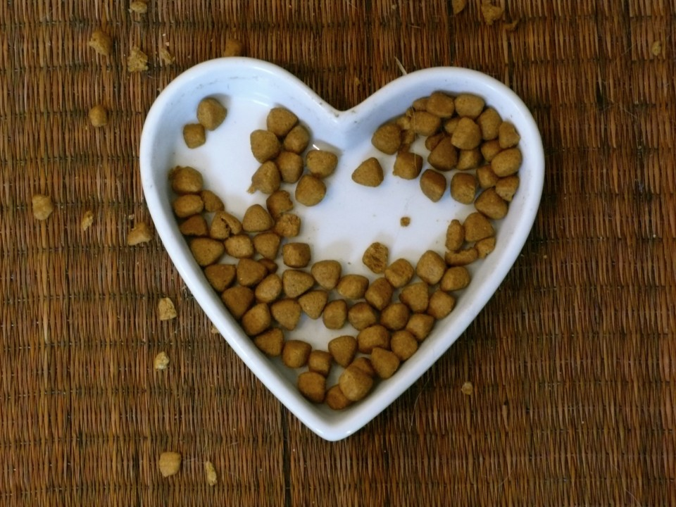 I think this bowl of kibble says it all!