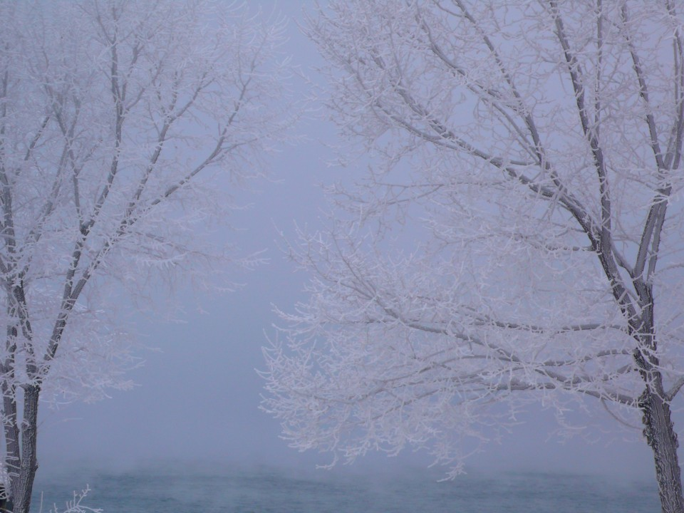 Winter Trees, Chelan, Washington
