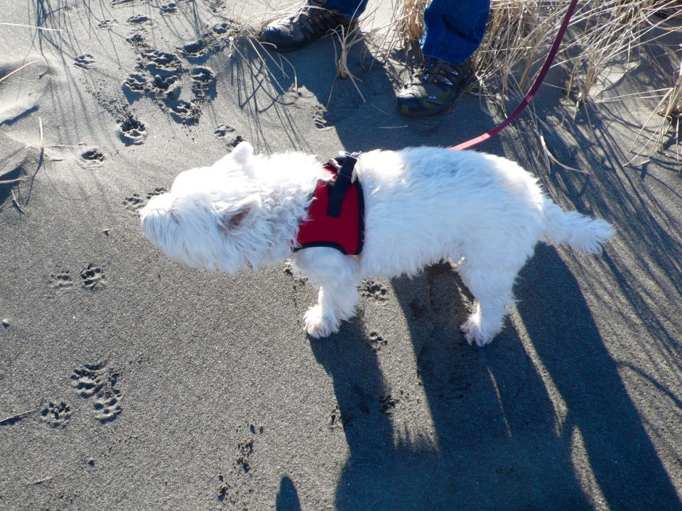 Zooey, our wind-blown guest of honor this past weekend