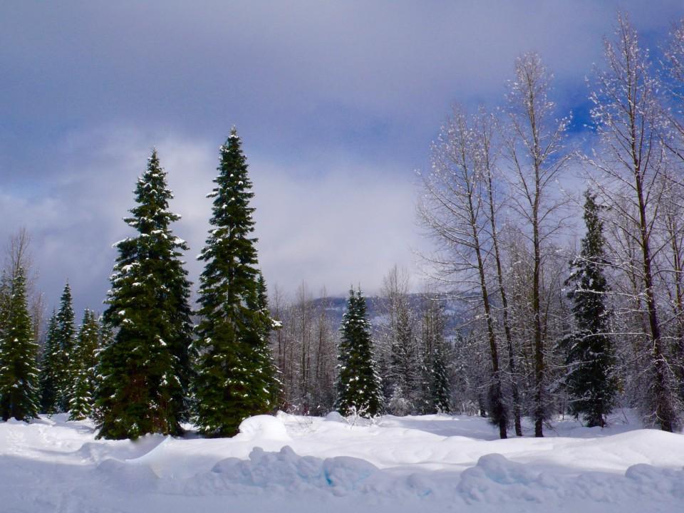 Perfect Winter Scene