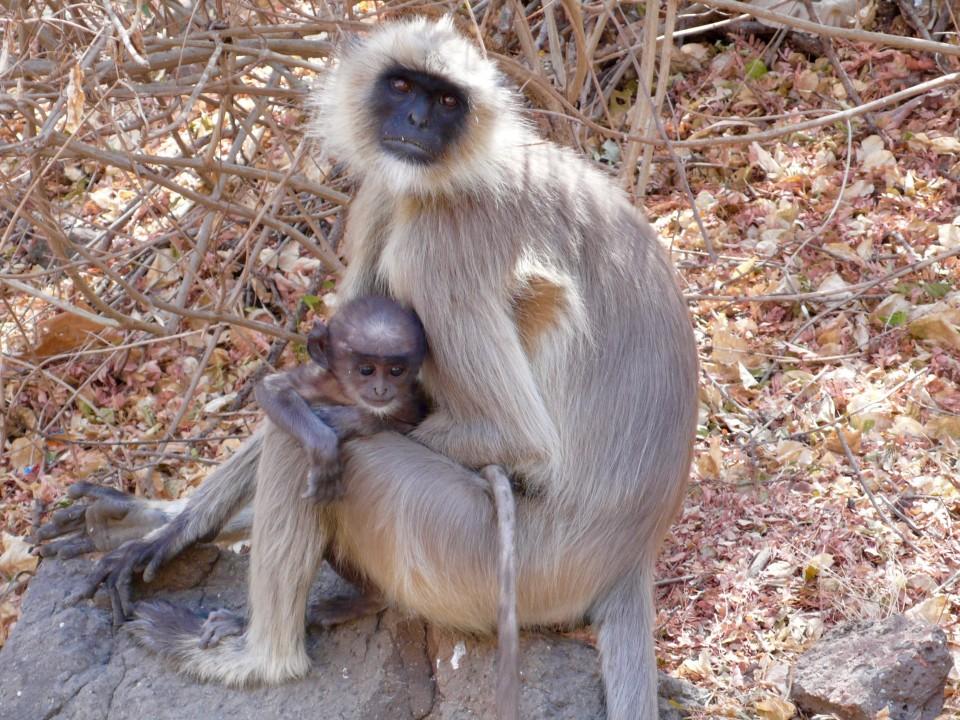 Monkey Mamma and Baby
