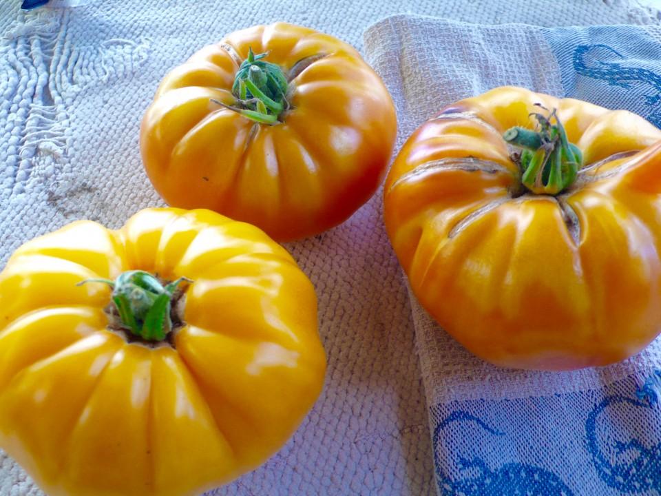 Heritage Tomatoes (Biondo Farm)