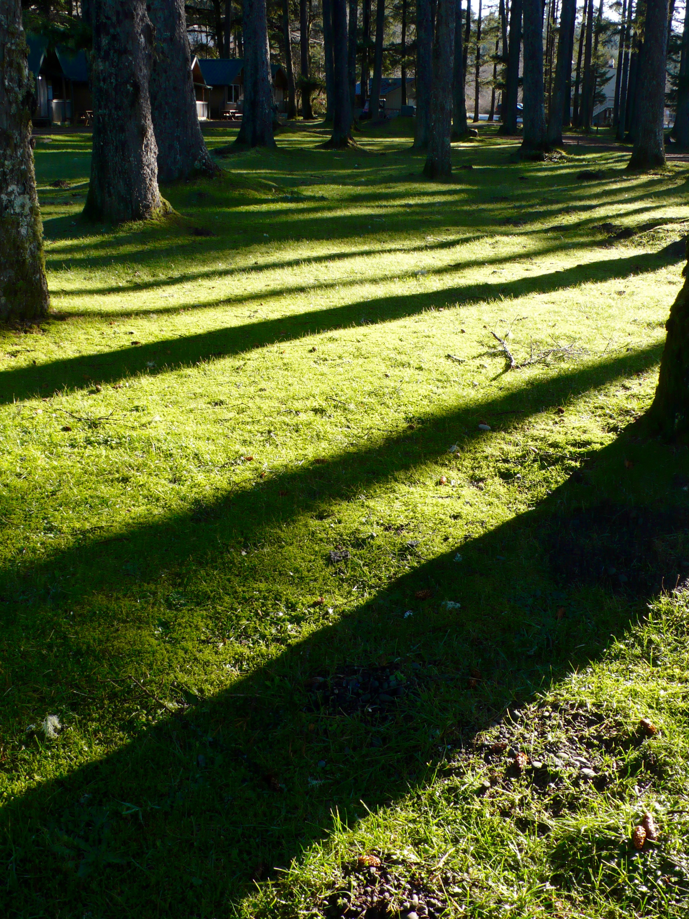 Long Shadows Across Grass (color untouched, just as I saw it!)