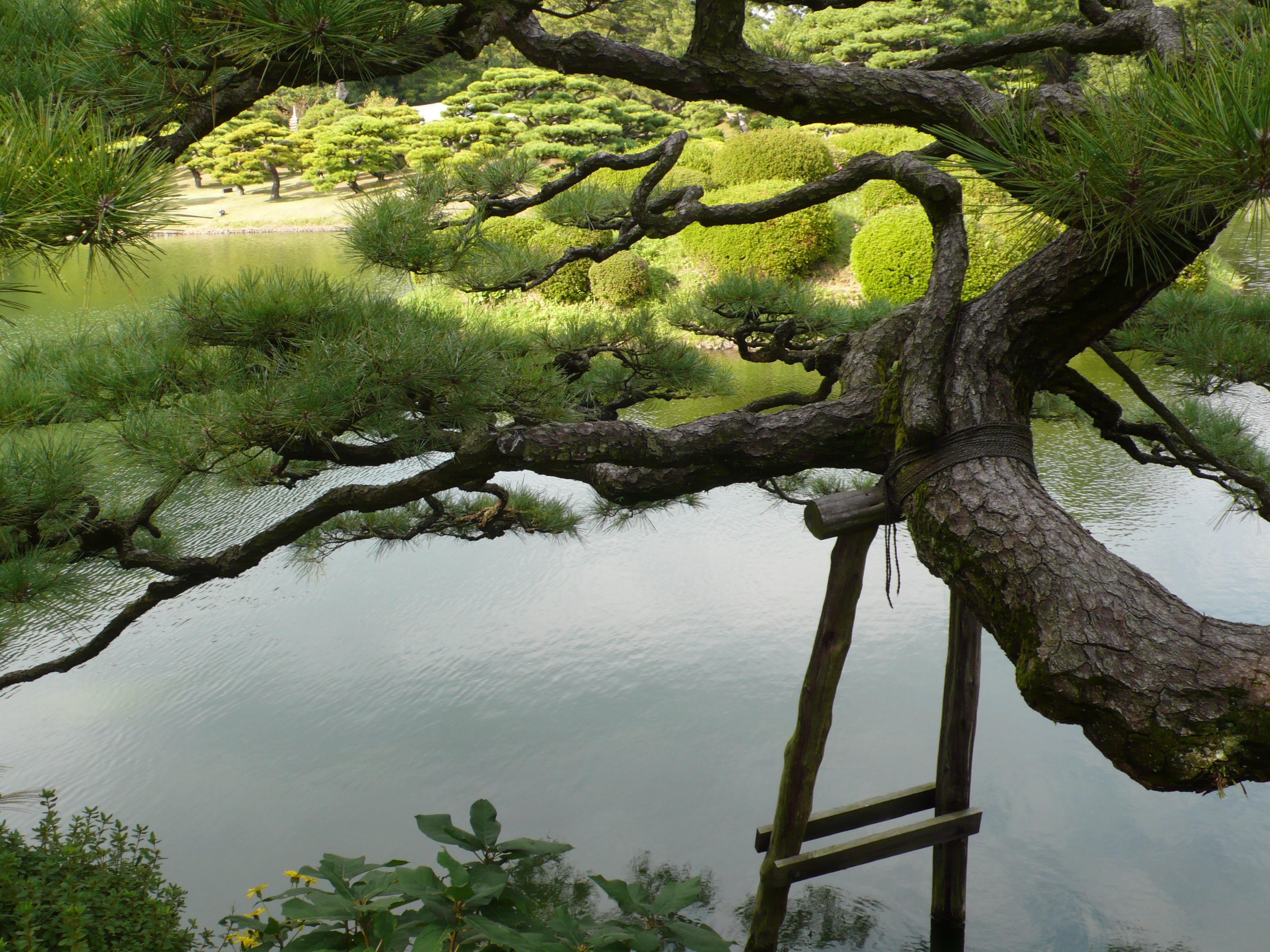 Land of tenderly tended gardens.  As soon as you walk in a Japanese garden, you lose yourself to the paths, the carefully placed and pruned trees, the ponds and reflections. The scent of earth and pine envelope you and let you know you are imperfectly perfect just as you are.