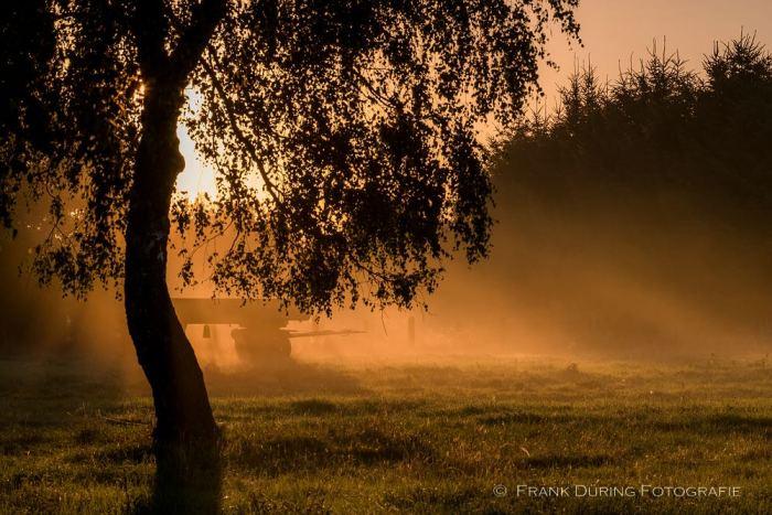 Sonnenaufgang, Darß, FDZ, Prerow