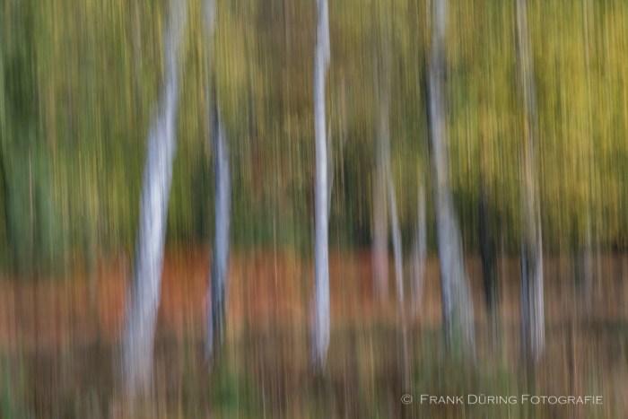 Birken, Wald, Ravenvennen, Wischer