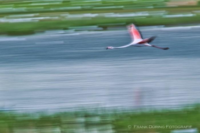 Flamingowischer, Flamingo, Zwillbrocker Venn