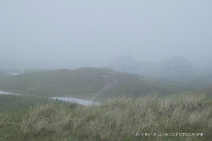 Dünen im Seenebel, bei Buren, Ameland, NL