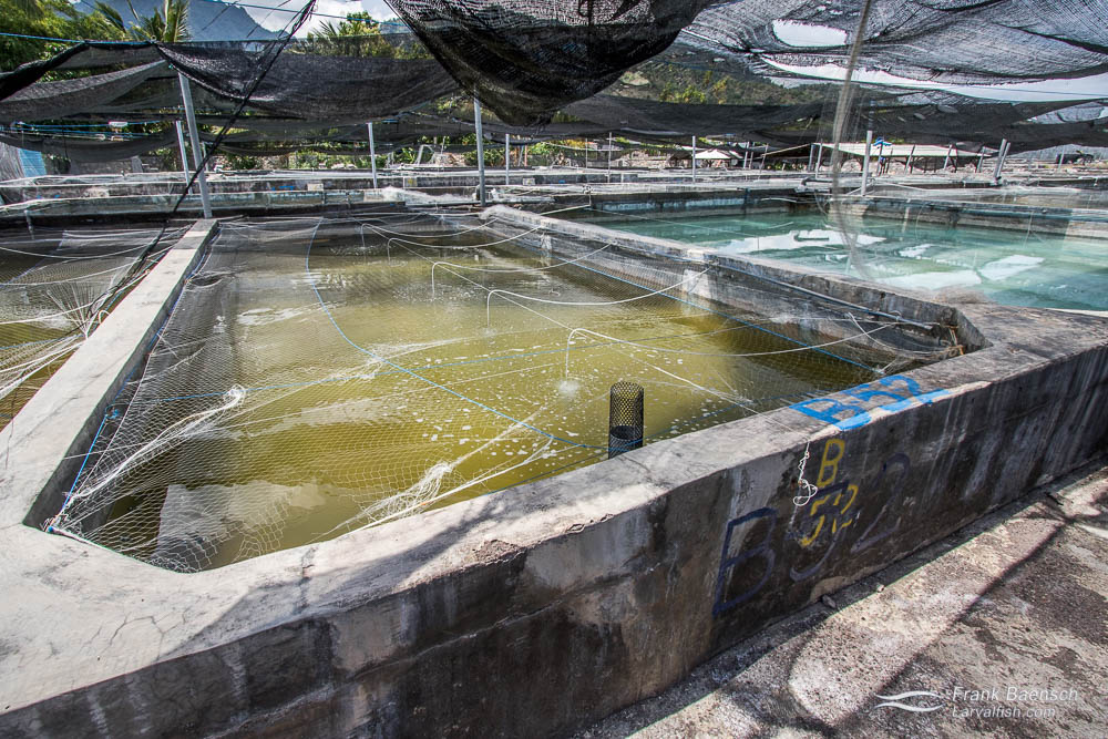 Juvenile growout tanks at Bali Aquarich's aquaculture complex in Indonesia.