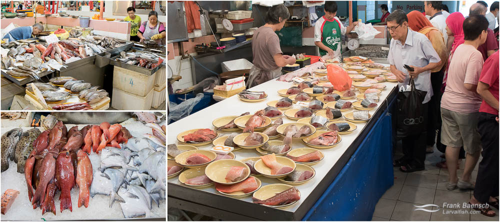 Chinatown seafood. TL: Grouper, pomfret, mullet, prawns or shrimp. BL: Barramundi, coral cods and pomfrets. R: Fish steaks to go. Groupers, mackeral, snapper, threadfin and salmon.