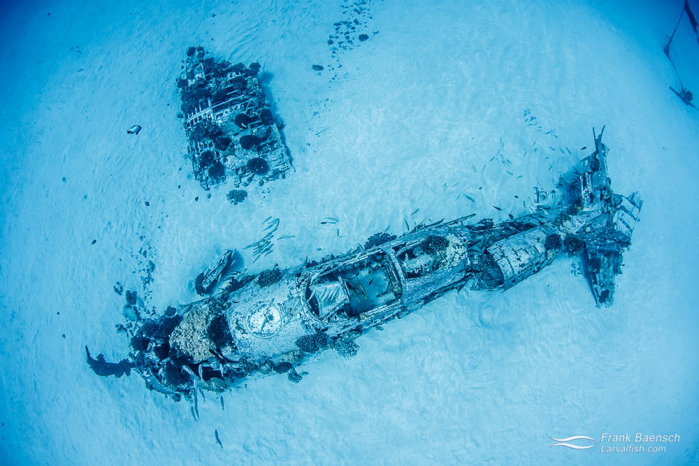 Corsair wreck off Oahu. Hawaii.
