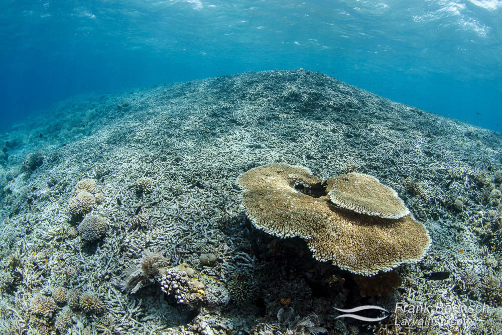 Damaged coral reef