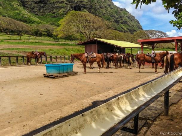 Oahu-079