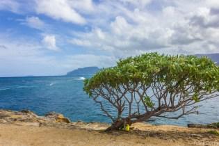 Oahu-089