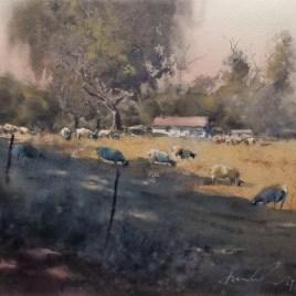 Rangeland sheep, Vineyard drive (2019)