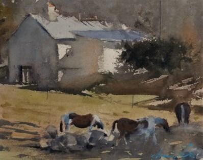 Vermont horses (2017)