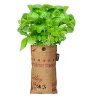 Mini-Garten BIO-Basilikum,1 Komplett-Set