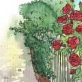 Rosen - Pflegetipps - Franks kleiner Garten