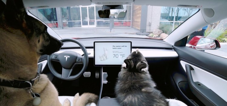 Tesla Introduces Dog Mode