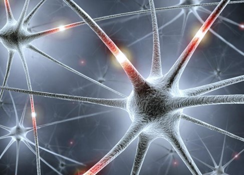 Neural Networks from the Ground Up