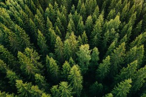 How Big Data Can Help Fight Deforestation