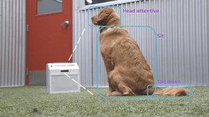 New AI dog trainer uses computer vision and a treat launcher