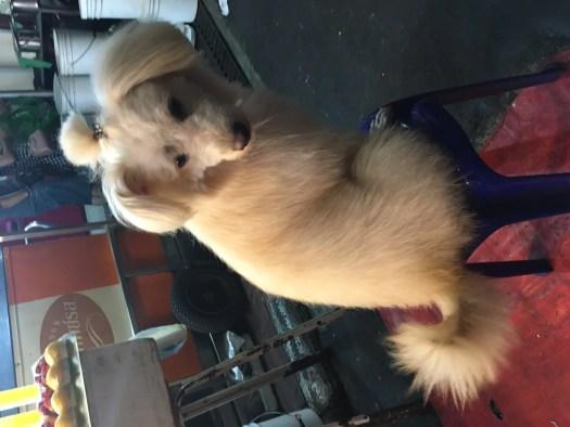 Dog chilling in Chinatown, Bangkok