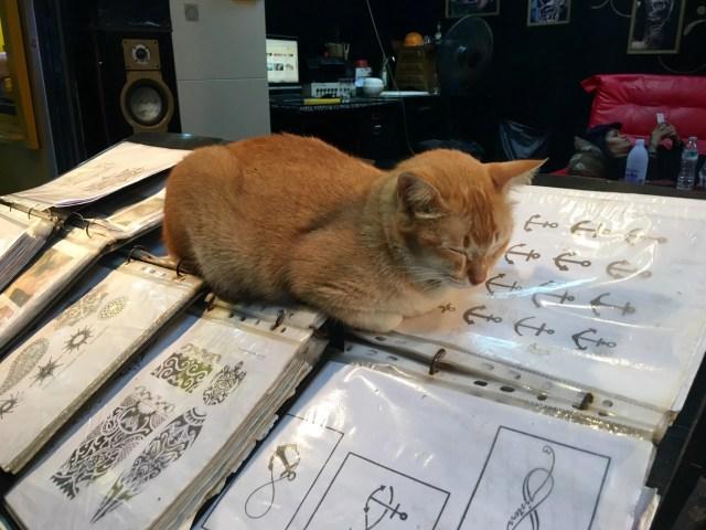Cat at a tattoo shop