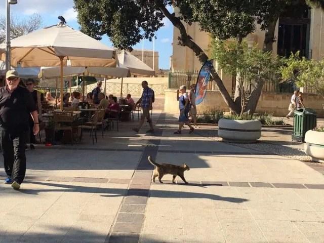 Cat strutting it, Valletta