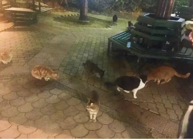 Cat Village, St Julian's